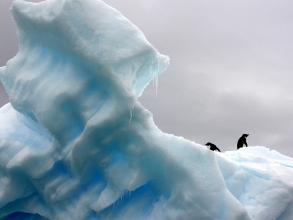 penguins, iceberg, polar